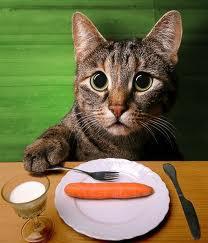 hungrycat